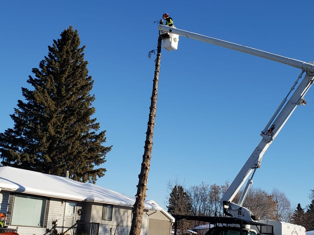 Professional tree removal in Prince Albert