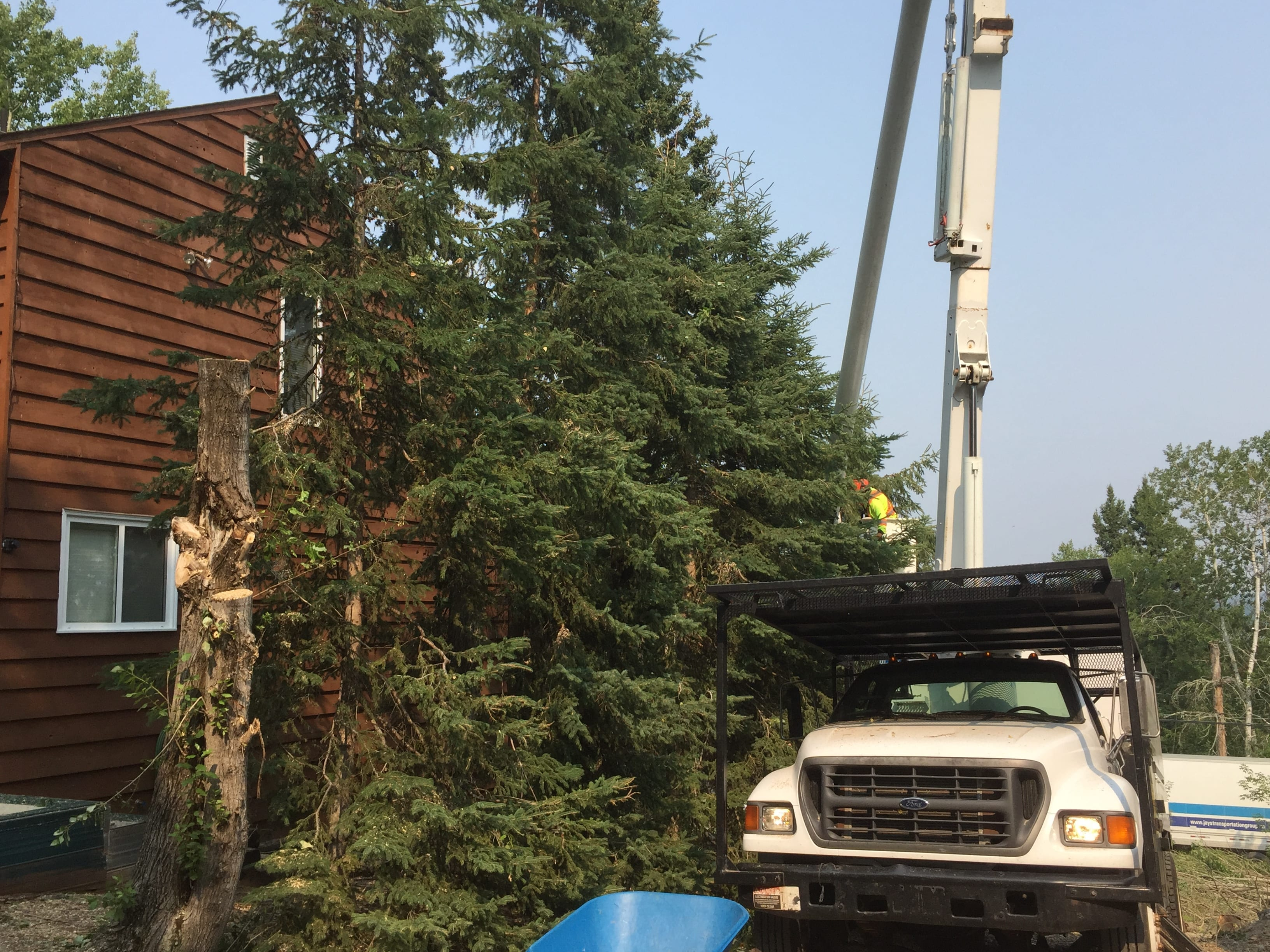 Tree removal, tree maintenance and tree trimming in the Prince Albert area.
