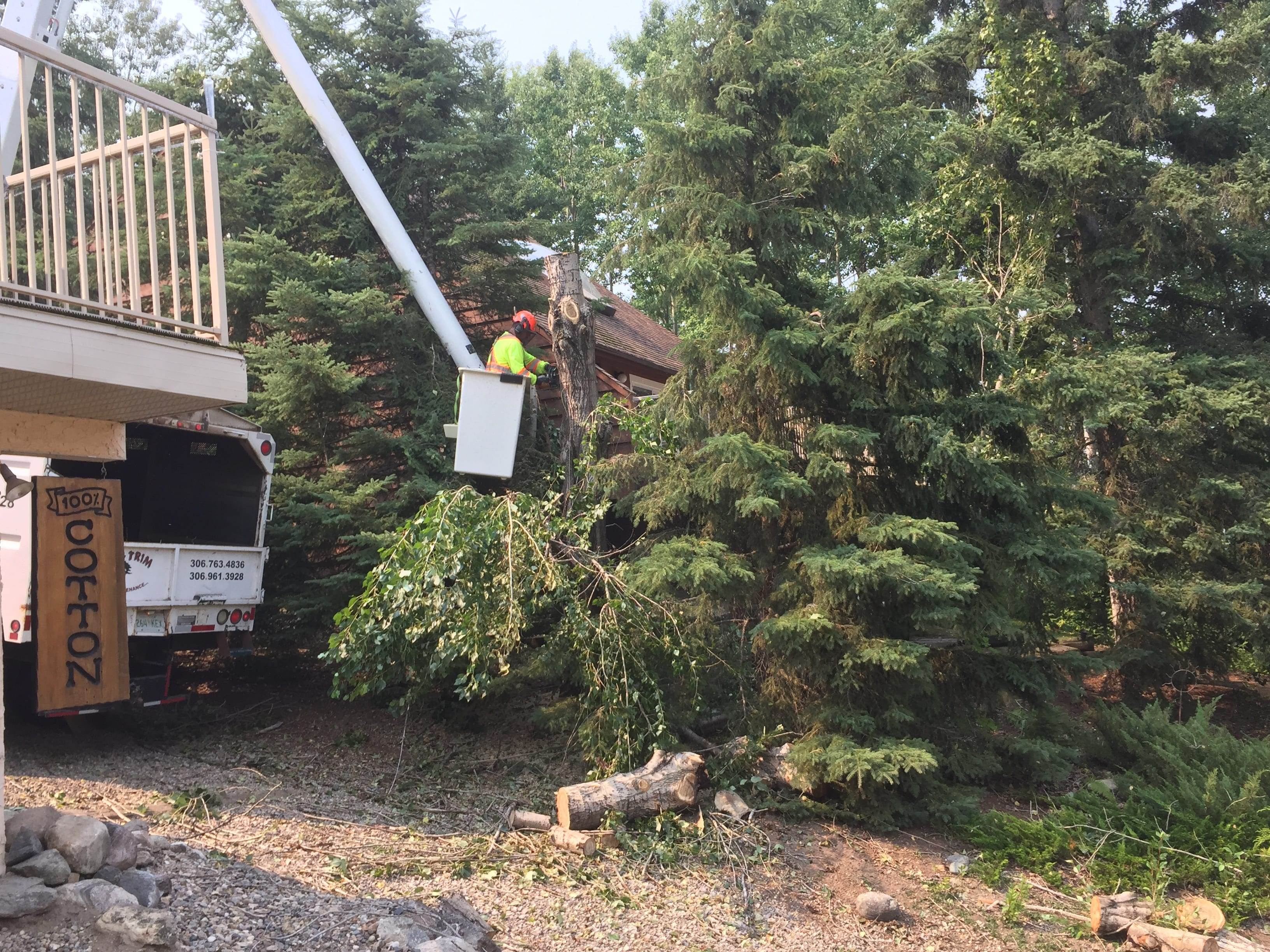 Fallen trees cleanup up after storm damage